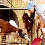 vidiek-farma-pole-druzstvo-polnohospodarstvo-nestandard2